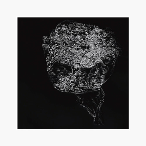 Toop, David: Entities Inertias Faint Beings [VINYL] (Room40)