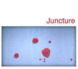 Various Artists: Juncture