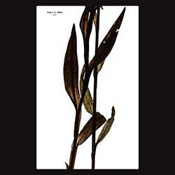 Ratkje, Maja S.K.: Sult [VINYL _ CD] (Rune Grammofon)