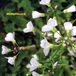 Schiller, Christoph / Millefleurs: Millefleurs (Creative Sources)