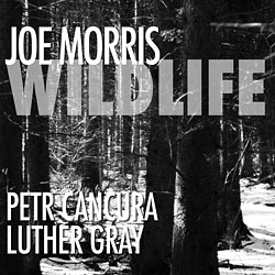 Morris, Joe: Wildlife