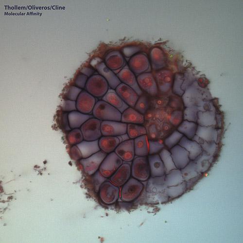 Thollem / Oliveros / Cline: Molecular Affinity [VINYL + DOWNLOAD] (Roaratorio)