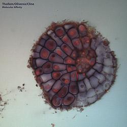 Thollem / Oliveros / Cline: Molecular Affinity [VINYL + DOWNLOAD]